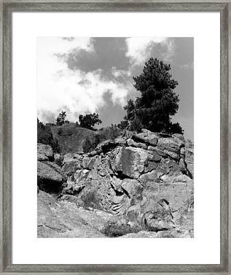 Pinnacle Pine Framed Print