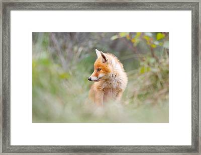 Pinocchio - The Long Nosed Fox Cub Framed Print by Roeselien Raimond