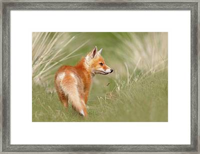 Pinocchio - The Long Nosed Fox Kit Framed Print by Roeselien Raimond