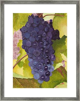 Pinot Noir Ready For Harvest Framed Print by Mike Robles