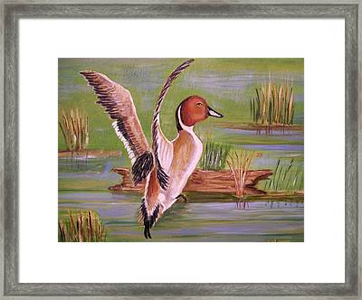 Pintail Duck II Framed Print