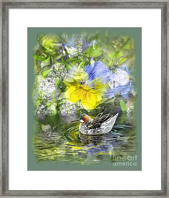 Pintail Pond Framed Print by Chuck Brittenham