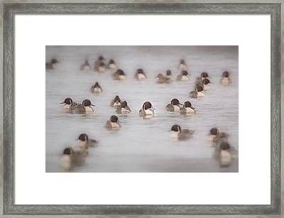 Pintail Repeat  Framed Print
