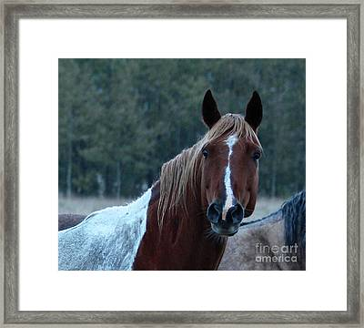 Framed Print featuring the photograph Pinto by Ann E Robson