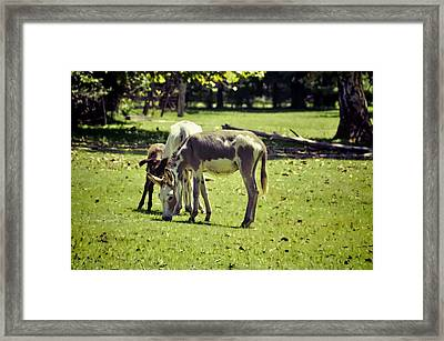 Pinto Donkey I Framed Print by Jan Amiss Photography