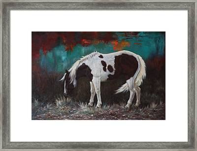 Pinto Framed Print by Harvie Brown