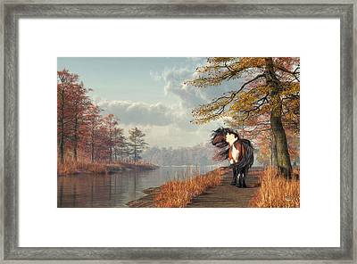 Pinto Horse On A Riverside Trail Framed Print