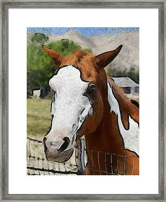 Framed Print featuring the photograph Pinto In The Pasture Portrait  by Barbara Snyder