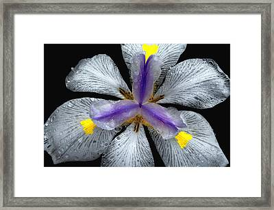 Pinwheel Lace Framed Print by Lyle  Huisken