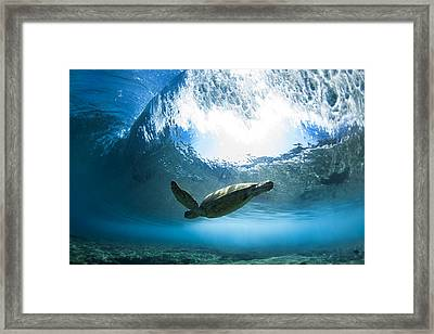 Pipe Turtle Glide Framed Print by Sean Davey