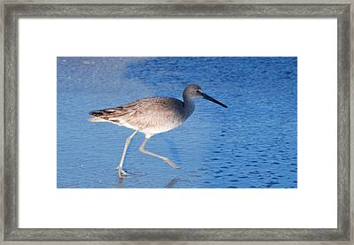 Snipe Hunting Framed Print by Bill Driscoll
