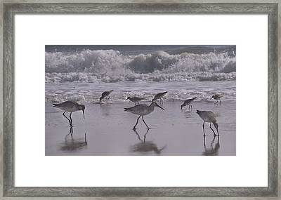 Piper Paradise Framed Print