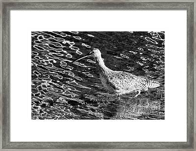 Piper Profile, Black And White Framed Print