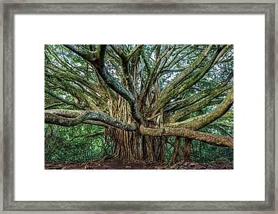 Pipiwai Banyan Framed Print by Kelley King