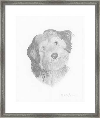 Pippin Framed Print