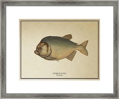 Piranha Framed Print by Ambro Fine Art