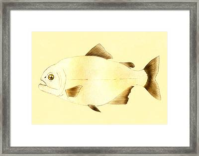 Piranha Fish Framed Print by Francis Imossi