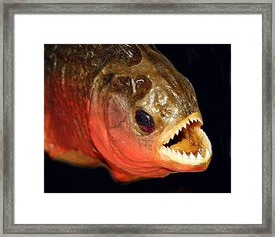 Piranha Framed Print by Larry Linton