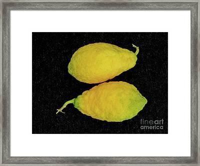 Piretti Cedrat Citrus Lemons Framed Print