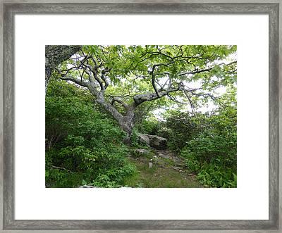 Pisgah Trail Magic Framed Print by Joel Deutsch