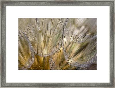 Pissenlits Framed Print by Falko Follert