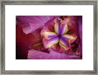 Pistil Macro Framed Print