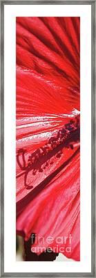 Pistil Shadow Framed Print