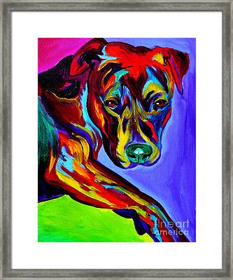 Pit Bull - Gaze Framed Print by Alicia VanNoy Call