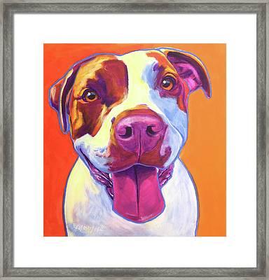 Pit Bull - Gemma Framed Print