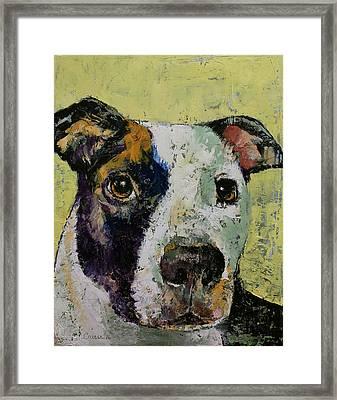 Pit Bull Portrait Framed Print