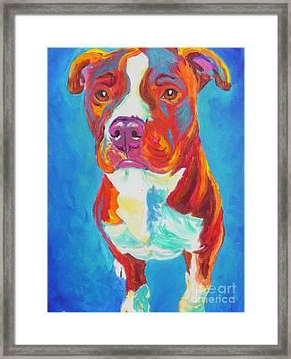 Pit Bull - Puppy Dog Eyes Framed Print