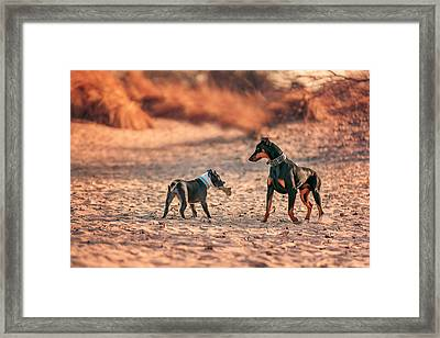 Framed Print featuring the photograph Pitbull And Doberman by Peter Lakomy