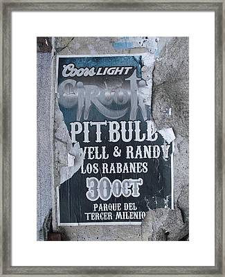 Pitbull Framed Print by Anna Villarreal Garbis