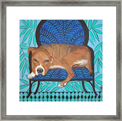 Pitbull At Rest Framed Print by Judy Henn