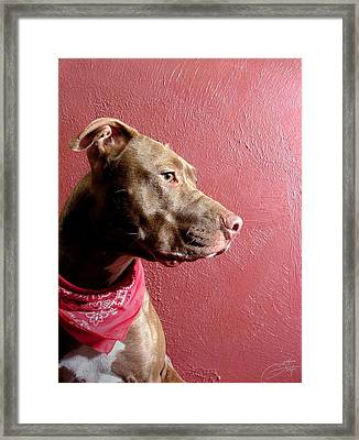Pitbull Pride Framed Print by Geerah Baden-Karamally
