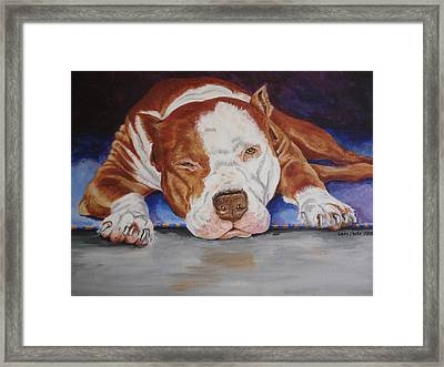 Pitbull Relaxing Framed Print by Laura Bolle