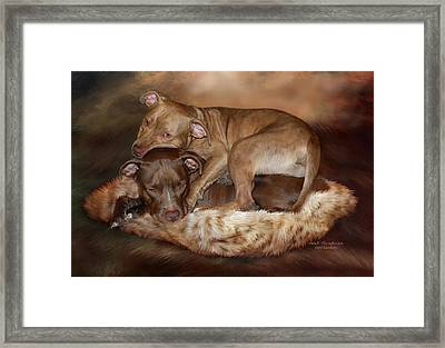 Pitbulls - The Softer Side Framed Print