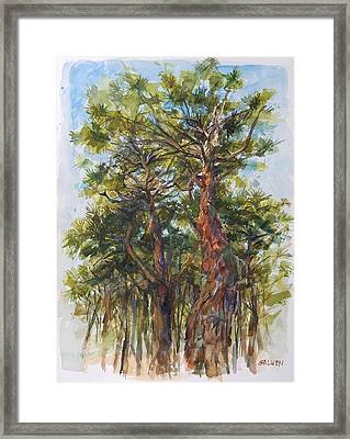 Pitch Pines, Cape Cod Framed Print by Peter Salwen
