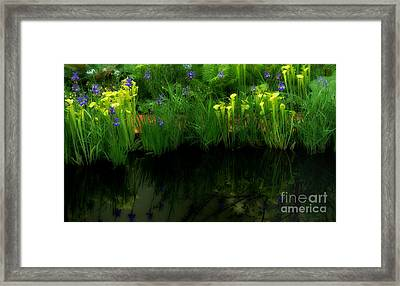 Pitcher Plant Garden Framed Print by Mike Nellums