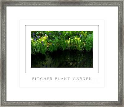 Pitcher Plant Garden Poster Framed Print by Mike Nellums