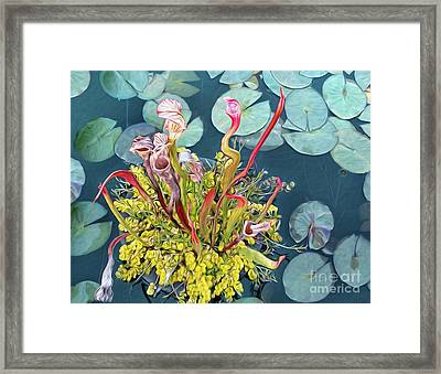 Pitcher Plants And Lily Pads By Kaye Menner Framed Print