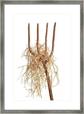 Pitchfork With Hay Framed Print by Amanda Elwell
