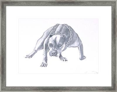 Pitt Bull With Chains Framed Print by Rebecca Bellomo