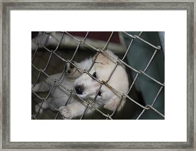 Pity Puppy Framed Print by Nathan Grisham