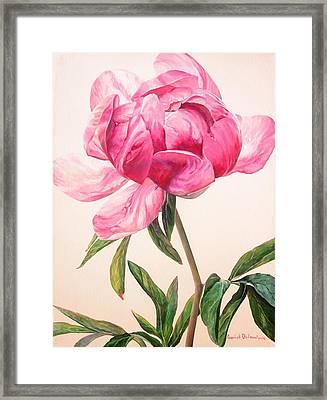 Pivoine 1 Framed Print by Muriel Dolemieux