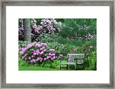 Place To Rest Framed Print