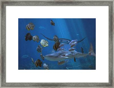Placid Kingdom  Framed Print by Betsy Knapp