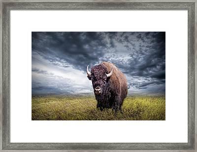 Plains Buffalo On The Prairie Framed Print