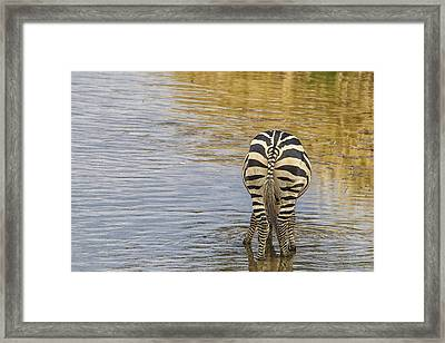 Framed Print featuring the tapestry - textile Plains Zebra by Kathy Adams Clark