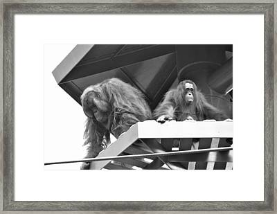 Planet Of The Apes Framed Print